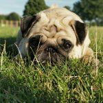España multará con 30.000 euros a quienes peguen o maltrate a sus mascotas
